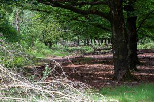 UOV De Kring De Maashorst boswandeling